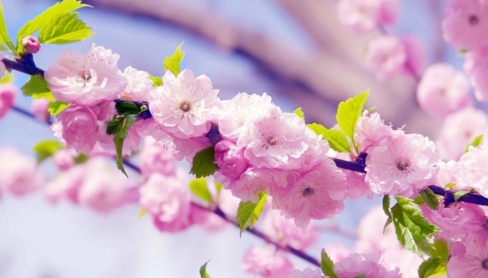 春季拓展开始啦|拓展培训,上海拓展培训,培训,企业培训,拓展训练,拓展训练,团队,春季,春季拓展,赏花